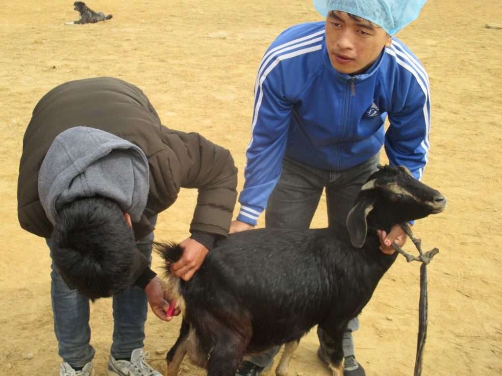 Animal health camp